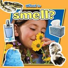 What is Smell? (Senses, Human Body)