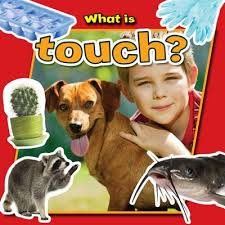 What is Touch? (Senses, Human Body)