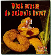 What senses do animals have? (BC4, HCOS4)