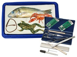 Exploring Creation with Biology Lab Dissection Science Kits (Apologia, Frog, Perch, Crayfish, Worm) STEM