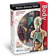 Human Body Anatomy Model (CP5, CP6, BC5, BC6)